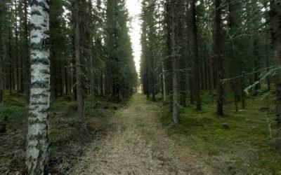 Eväshetki ja päivälepo puussa Hakamaan Lammastilalla