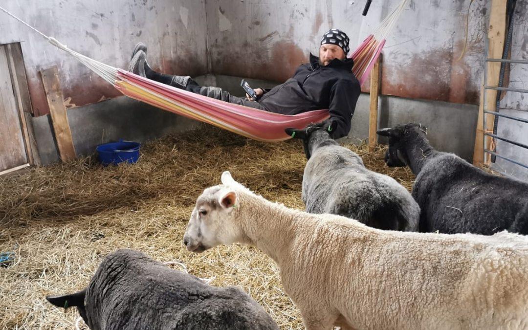 Päiväpötköttely lampaiden kanssa